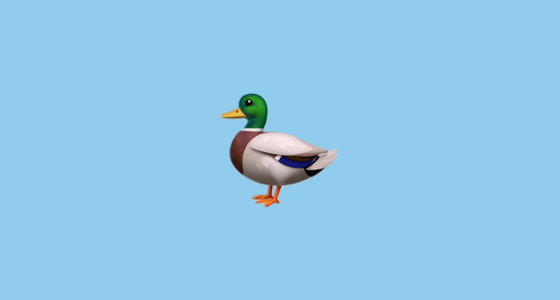duck emoji - A Picture Of A Duck