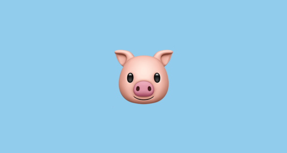 Pig Care | Best Friends Animal Society