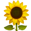 Sunflower on Apple iOS 11.2