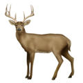 Deer on Emojipedia 5.2