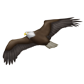 Eagle on Emojipedia 5.2