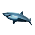 Shark on Emojipedia 5.2