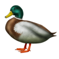 Duck on Emojipedia 11.1