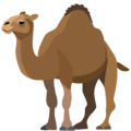 Camel on Facebook 2.2