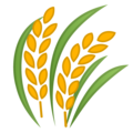 Sheaf of Rice on Google Android 8.1