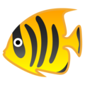 Tropical Fish on Google Android 8.1
