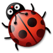 Lady Beetle on Samsung Galaxy S8 (April 2017)