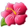 Hibiscus on Samsung Experience 9.1