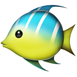 Tropical Fish on Apple iOS 11.2