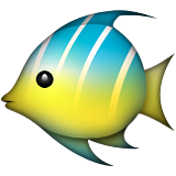 Tropical Fish on Apple iOS 6.0