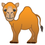 Camel on Google Android 8.0